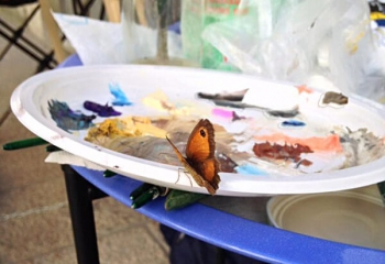 una farfalla fa visita a Deborah
